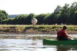Paysage animaux vache balades randonnées nautiques canoë-kayak location Thury Plein Air Thury-Harcourt